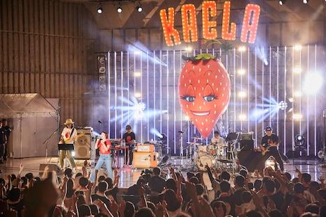 木村カエラ「KAELA presents GO!GO! KAELAND 2019 -15years anniversary-」の様子。