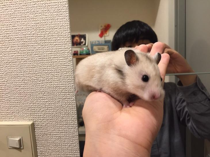 柴田(パソコン音楽クラブ)× ハムスターのハムスター