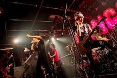 ザ クロマニヨンズ ライブ