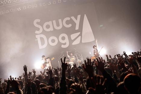 Saucy Dog(撮影:白石達也)
