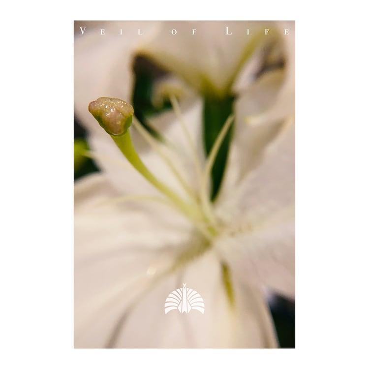 東京事変「命の帳」配信ジャケット