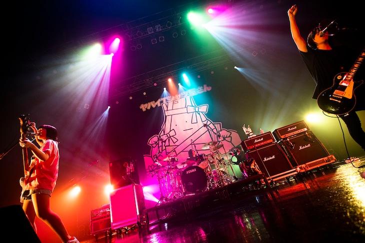 """ヤバイTシャツ屋さん「ヤバイTシャツ屋さん """"You need the Tank-top"""" TOUR 2020-2021」東京・Zepp Tokyo公演の様子。(撮影:オイケカオリ)"""