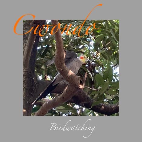 Cwondo「Birdwatching」配信ジャケット