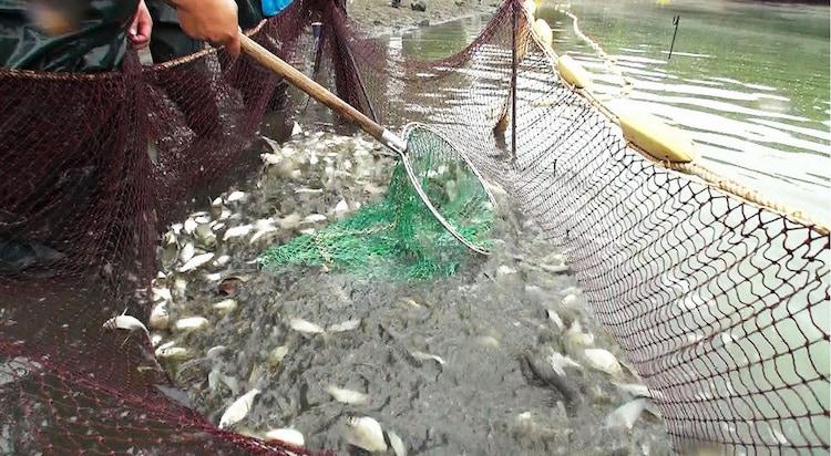 山田池では地引網を行う。(c)テレビ東京