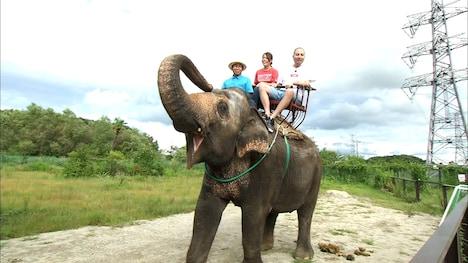ゾウに乗るスリムクラブ内間。(c)ABC