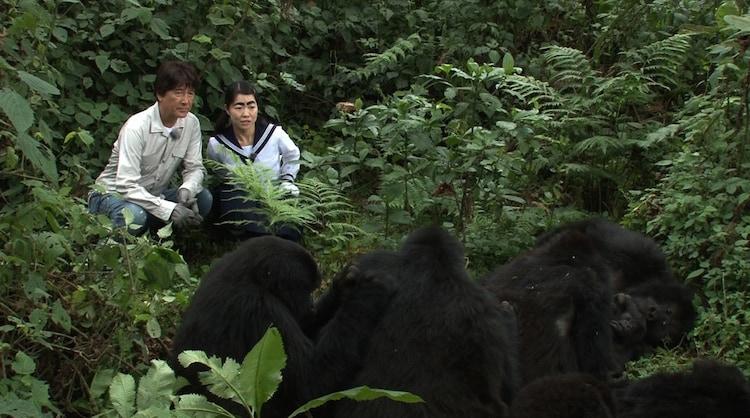 マウンテンゴリラを見る(左から)草刈正雄、イモトアヤ。(c)日本テレビ