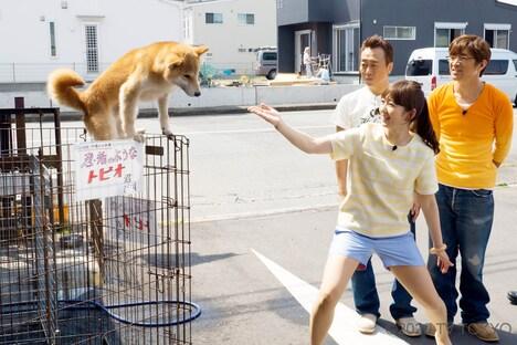 「モヤモヤさまぁ~ず2」BD&DVD、vol.32の「小田原で超接戦!自転車ハンデ対決」のワンシーン。