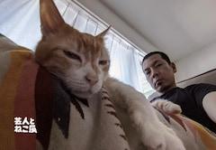 猫 かまいたち 山内