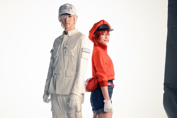 「体内活劇『はたらく細胞』」ビジュアル撮影の様子。左から和田雅成扮する白血球(好中球)、七木奏音扮する赤血球。