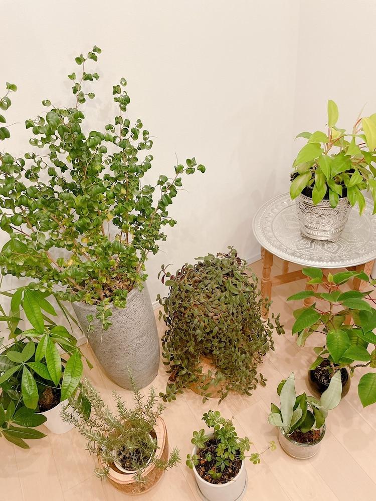 美弥るりかが育てている、大小さまざまな植物たち。