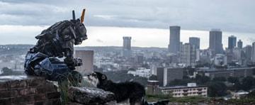 ヨハネスブルグの街を背景に、犬と戯れるチャッピー。