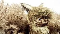 「ごん / GON, THE LITTLE FOX」 ©TAIYO KIKAKU Co., Ltd. / EXPJ, Ltd.
